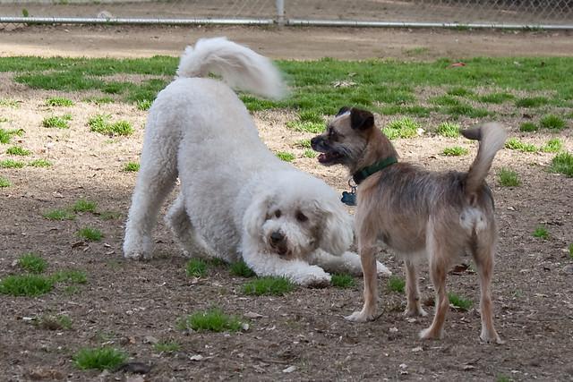 Wrigley S Pet Spa Long Beach Ca