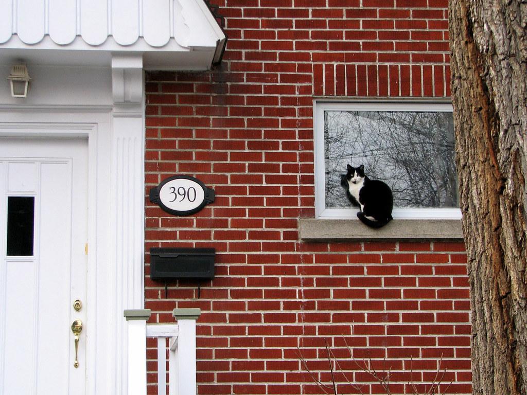 Un chat assis sur le bord de la fen tre a cat sitting on for Assis a la fenetre