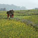 Women carry bundles through field in Kaski, Nepal