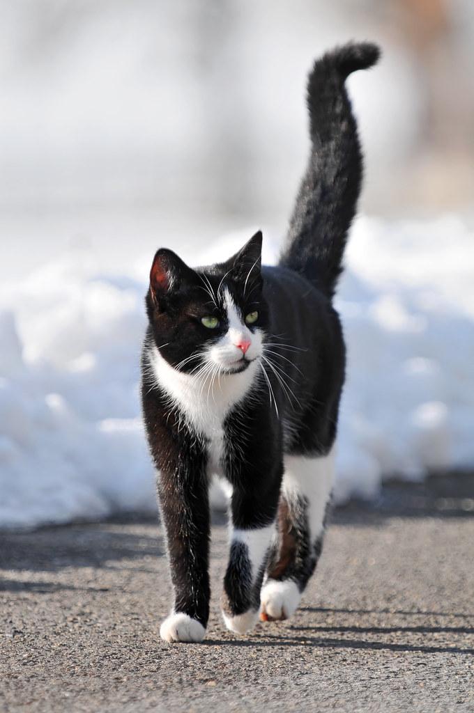«Сонник Кошка приснилась, к чему снится во сне Кошка»