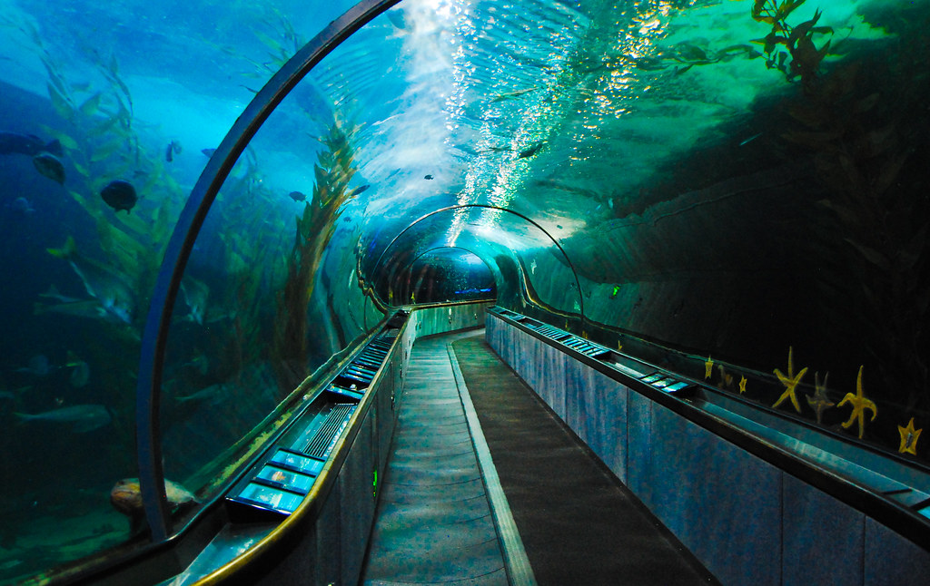 Underwater Tunnel At The Aquarium Of The Bay San