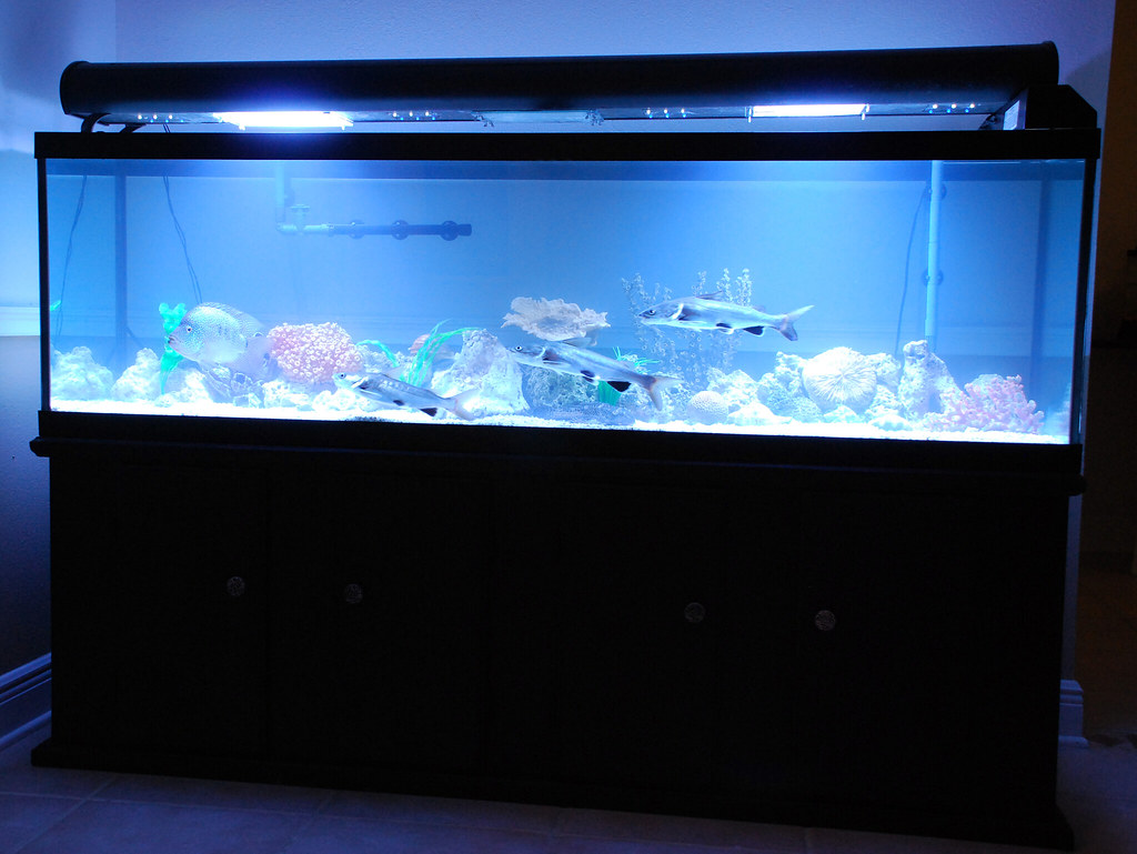 Gallon Fish Tank Decor Ideas