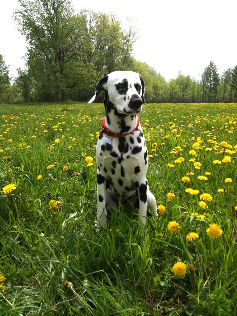 Sirius Dog Days