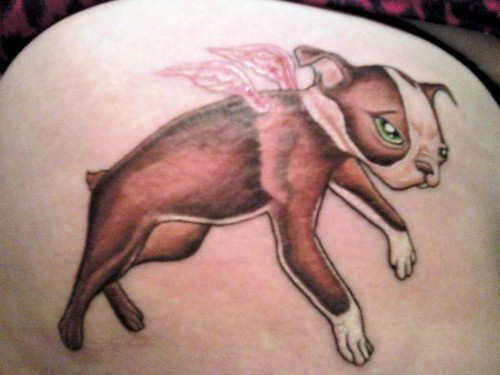 Flying Boston Terrier Tattoo Another Fan She Loved My Fly Flickr