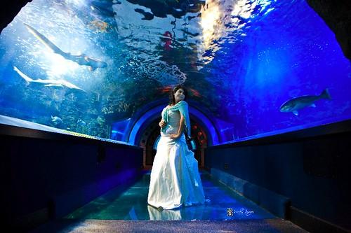 Newport Aquarium Visible Images Photography 2009 All