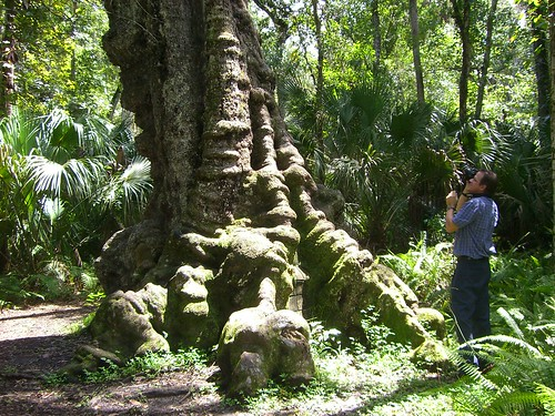 Ancient Oak Tree | by The Story of Florida's State Parks