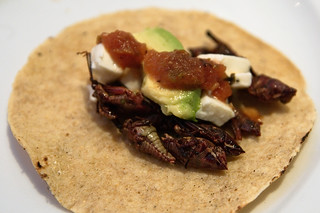 Tacos de Chapulines | by william.neuheisel