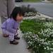 Flowers 0073