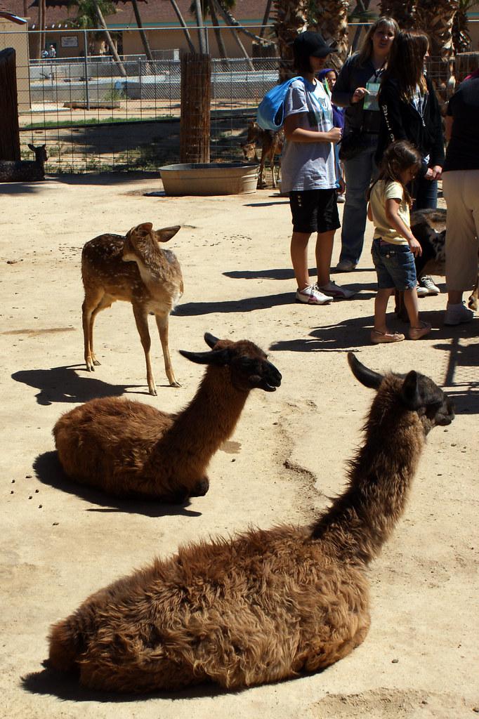 Petting Zoo At Wildlife World Zoo Amp Aquarium Located