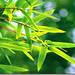 Evergreen Bamboo ~ 竹 报 平 安 (Zhu Bao Ping An)