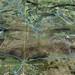 20090125 New Forest DARE GE Run