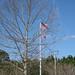 170 - Schoolyard flag
