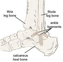 back ligaments diagram back bones names wiring diagram