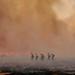 Avra Valley Buffelgrass Fire