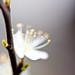Spring.....detail :-)