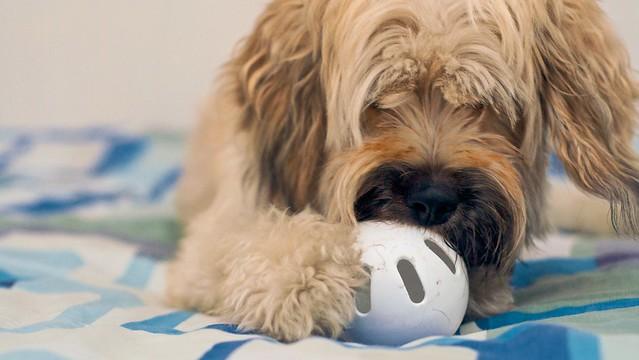 Toy Wiffle Dog
