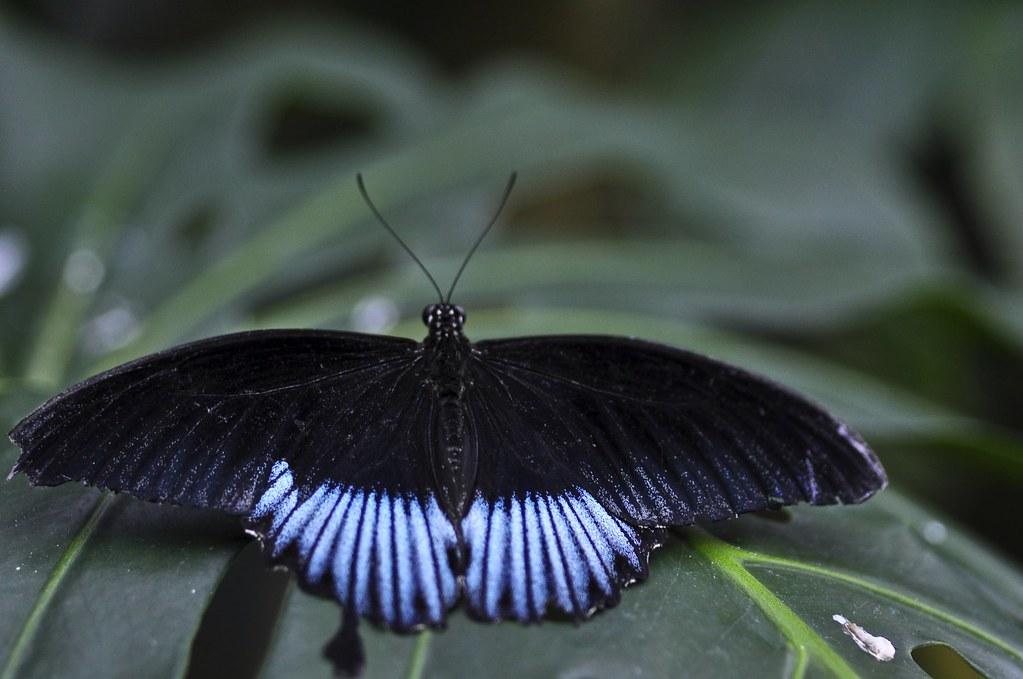 Butterfly Gardens Victoria Bc Flickr