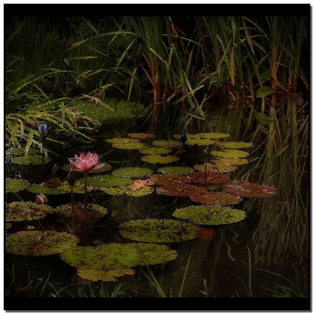 Monet in my mind 4 sulla superficie dello stagno for Piante dello stagno