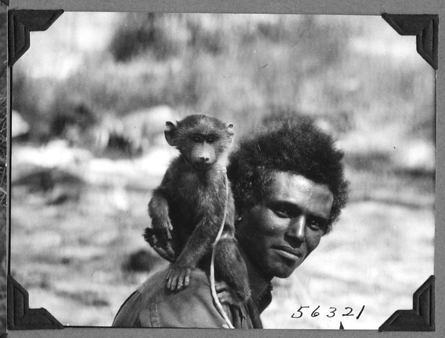 Tinish the dog-faced baboon on Allamayu's shoulder