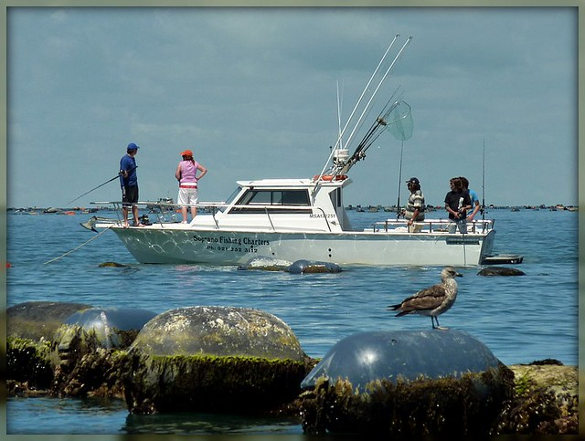 Image result for fishing nz