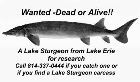 sturgeon lake online dating The blue lake system is home to three species of  dating your line:  gord pyzer says this ice-fishing lure is lethal in every season—if you know these secret.