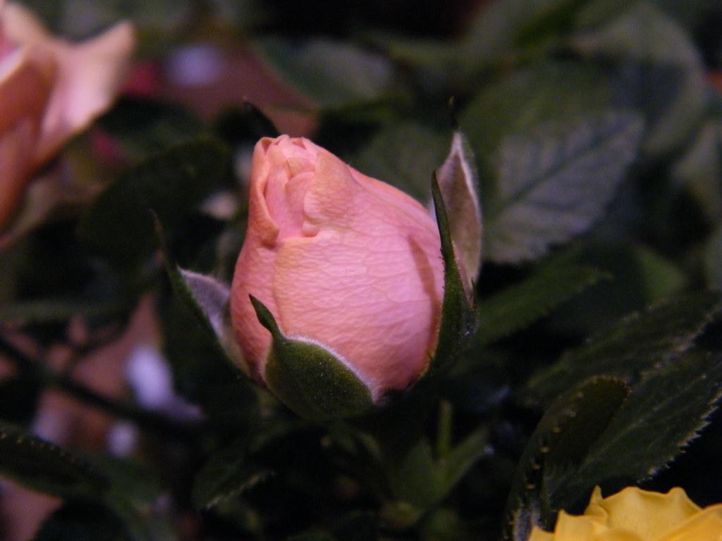 random flower at safeway A B C 52