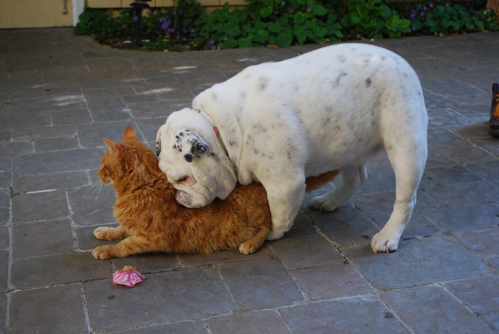 Dog Humping Cat Aemila Hugs Flickr