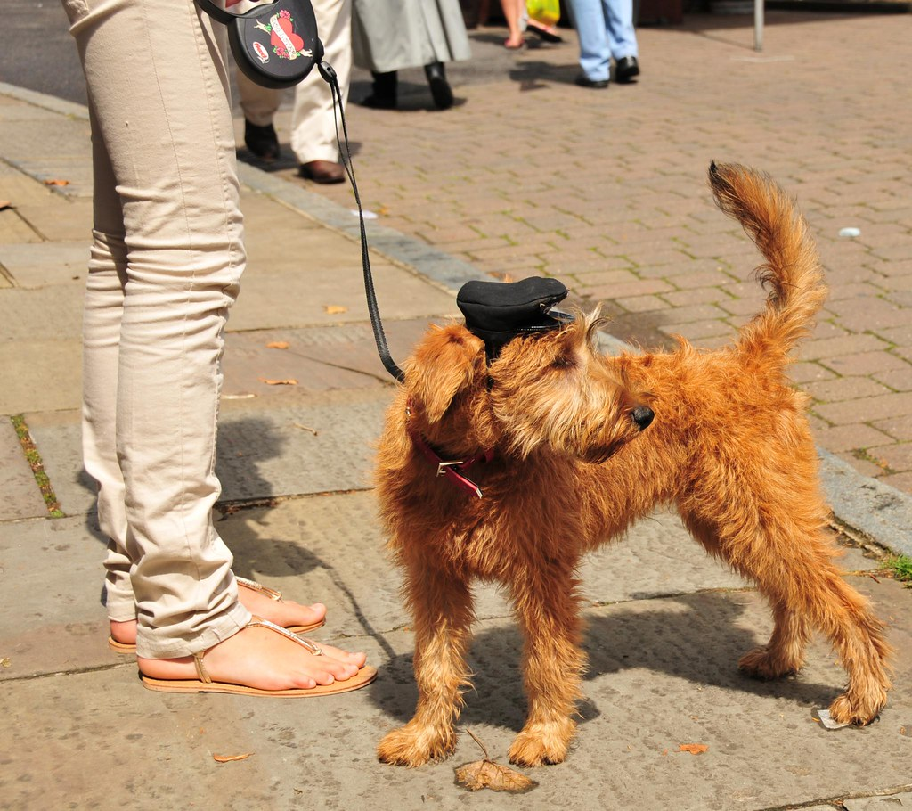 Dog Walking Jobs Woodstock
