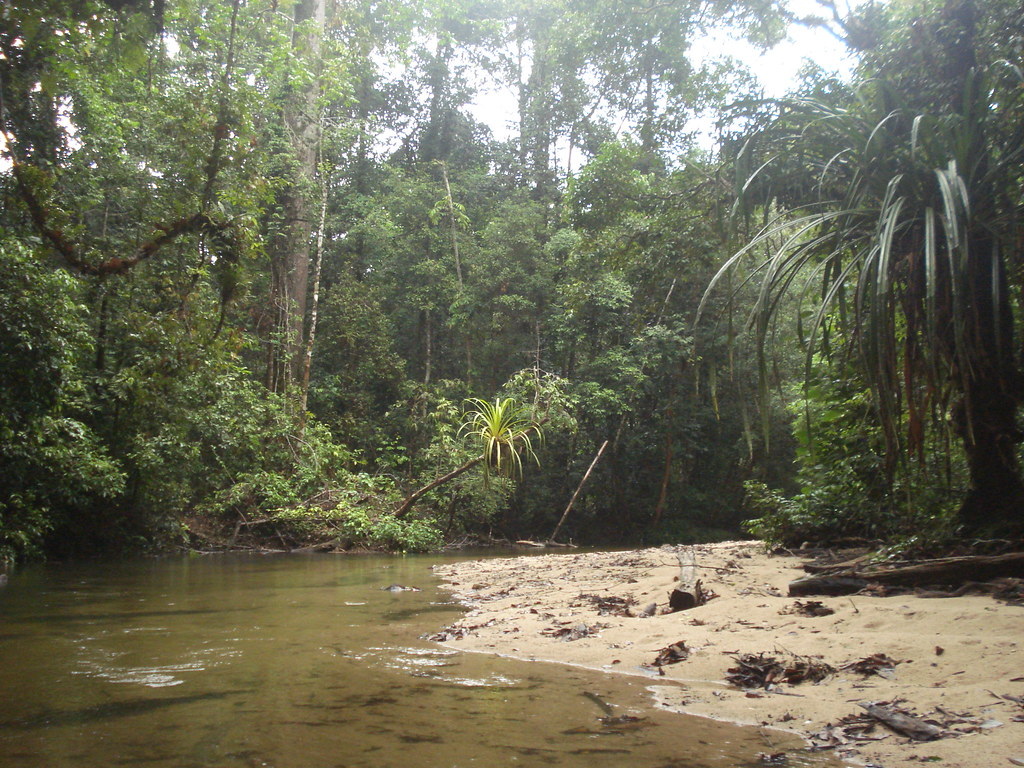 borneo jungle river river flowing past the research