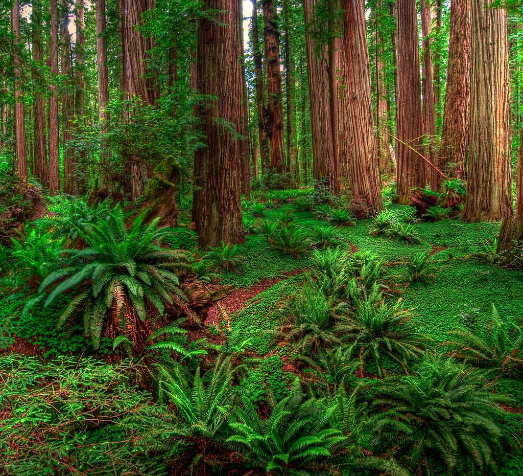 Humboldt county california dating
