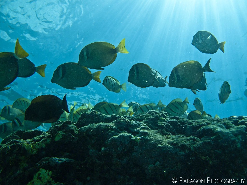 Water Fish Names Water Lives a Fish...and