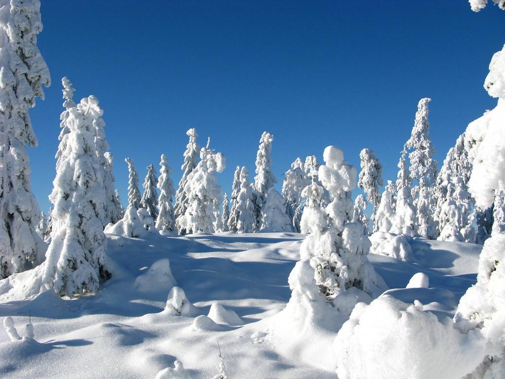 Winter Forest Sweden Beautiful Winter Day In Bergslagen