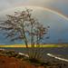 Rainbow over Ness 80 / 365