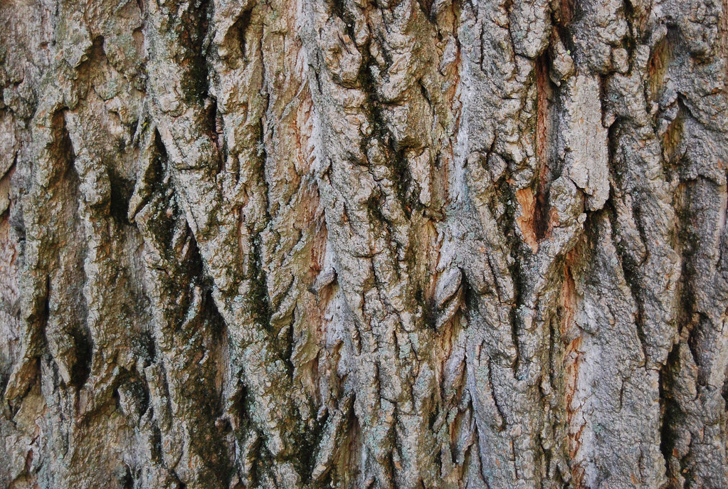 tree bark texture 04 this tree bark texture is part of