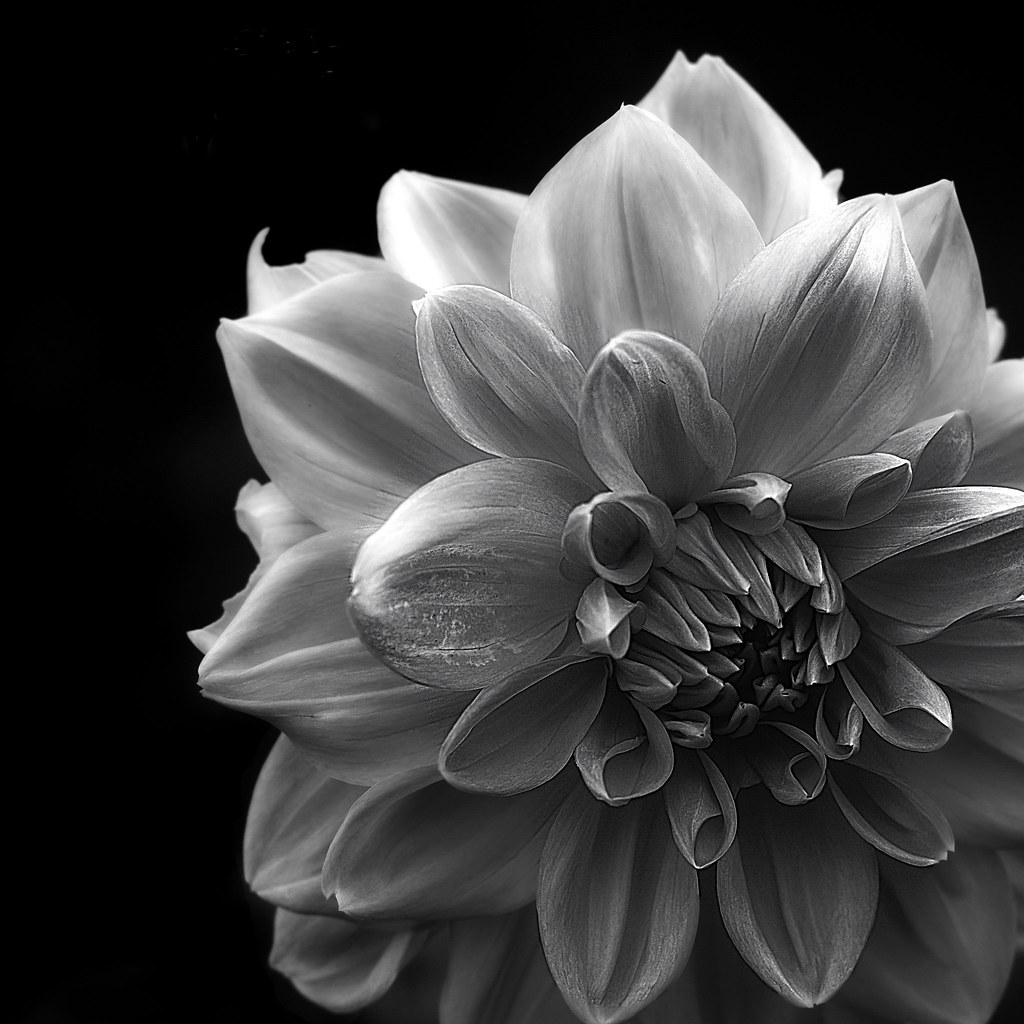 Black And White Flower | Taken in the Muséhagen (part of ...