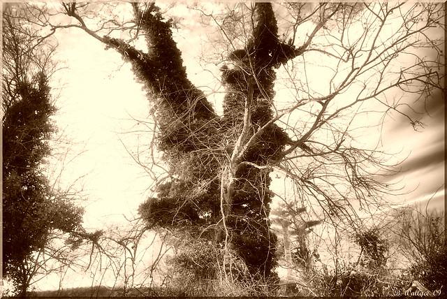 Ivy Tree Sepia