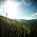 Broga Grass Field