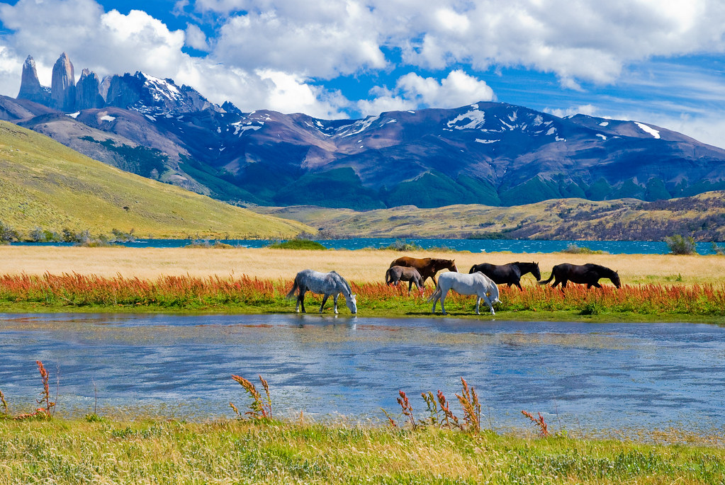 torres del paine map with 3371598532 on Hotel Las Torres Patagonia in addition Los Glaciares likewise Stock Image Scenic Landscape Patagonia South America Image26245271 also Destinations W Trek Torres Del Paine National Park 2 further Mountains trees horse national park Torres del Paine National Park Chile Patagonia autumn.