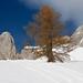 Snow at Schilpario Fopponi