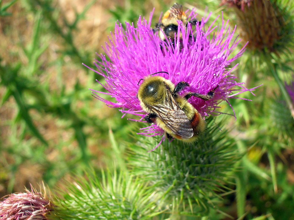 Can A Bumblebee Sting Kill A Dog