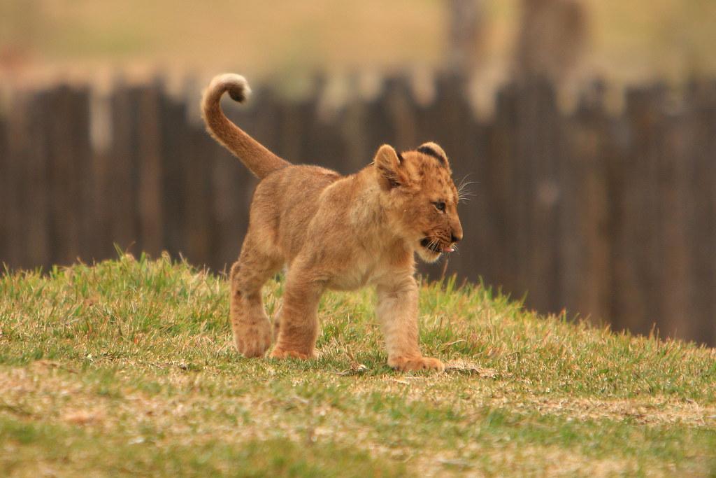 Permalink to San Diego Wild Animal Park Coupons 2015