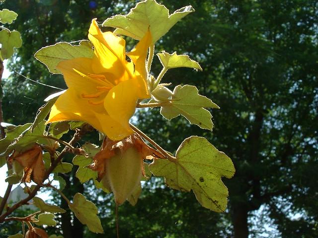 arbre fleur jaunes flickr photo sharing. Black Bedroom Furniture Sets. Home Design Ideas