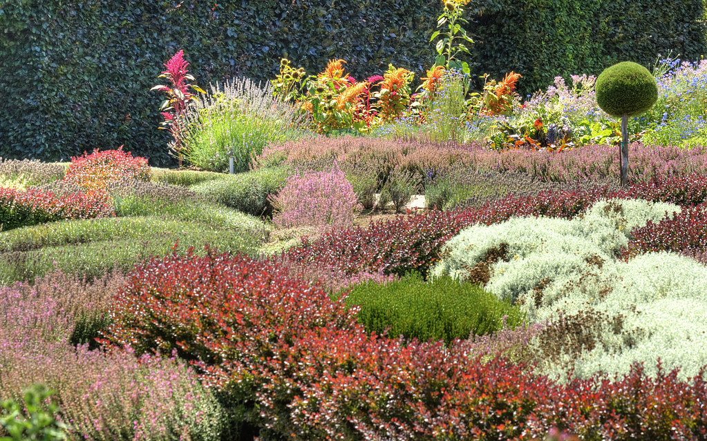 Filoli knot garden in august the colors and scents and tex flickr - Mediterranean garden plants colors and scents ...