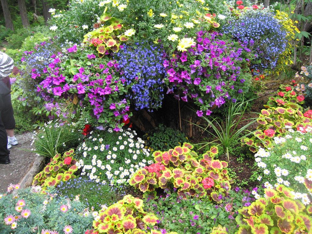 Beautiful Flowers In Glacier Gardens Glacier Gardens In