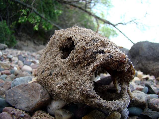 Sandy fish head flickr photo sharing for Fish head app
