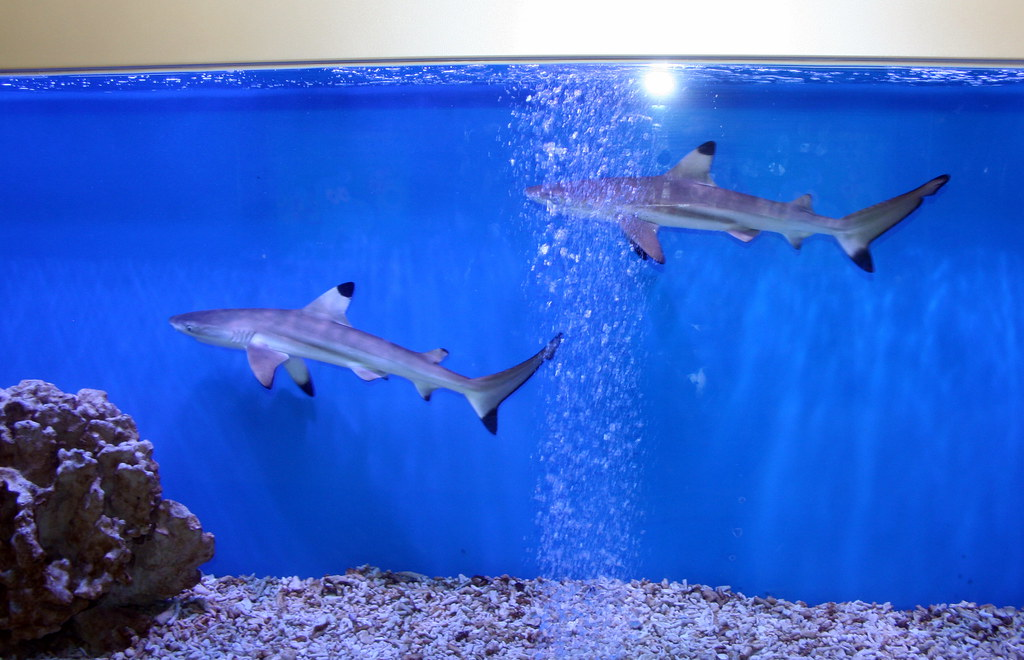 Shark aquarium in jing 39 an temple subway 1 the chinese for Shark fish tank