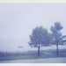 two trees and a boat wait patiently in the fog | september 27. 2009
