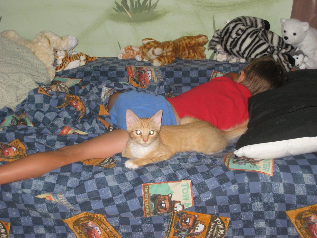 Nameless Cat Back Elh Sti