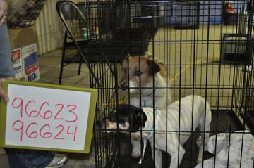 Black Dog Warehouse Sale