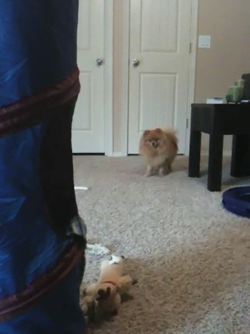 Cat Barks And Gets Caught
